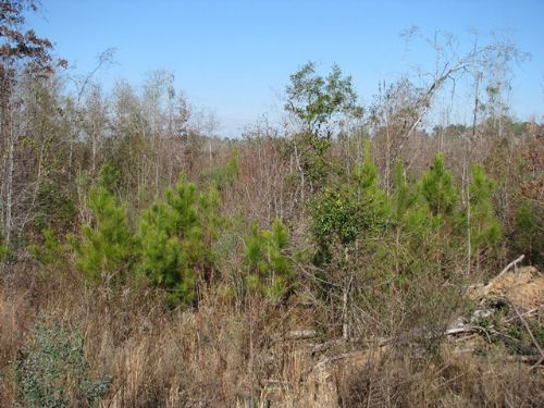 Owassa Tract : Evergreen : Conecuh County : Alabama