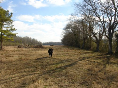Fenced, Pasture Land Nearly In Town : Wetumpka : Elmore County : Alabama