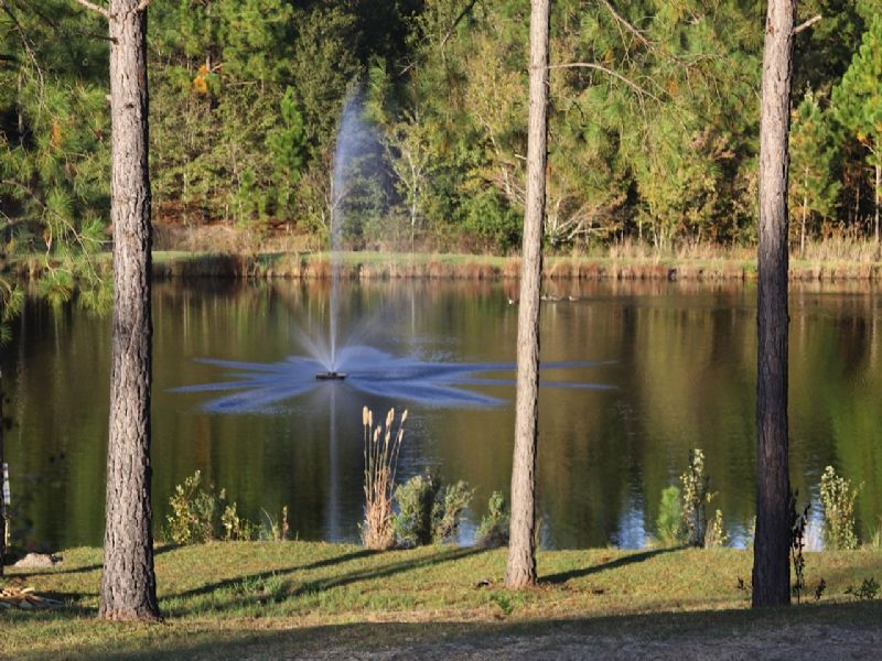 39+/- Acres Cabin, Pond And More : Collins : Tattnall County : Georgia
