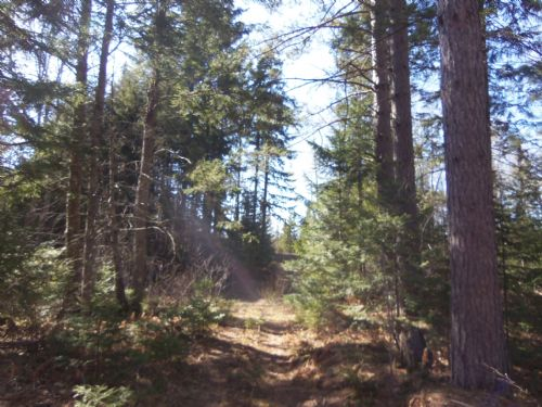 80 Acres On Hwy 51 In Oma : Oma : Iron County : Wisconsin