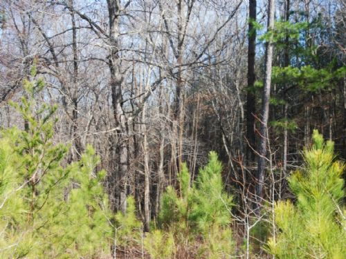 9.77 Acre Hunting Tract Or Homesite : Spartanburg : Spartanburg County : South Carolina