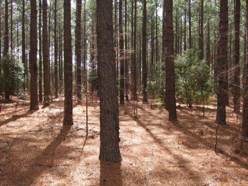 Hart Place : Bastonville : Warren County : Georgia