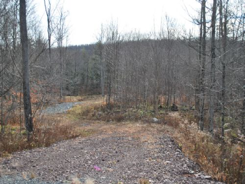 Lot 24, The Woods At Duck Harbor : Equinunk : Wayne County : Pennsylvania