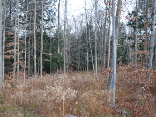 Lot 83, The Woods At Duck Harbor : Equinunk : Wayne County : Pennsylvania