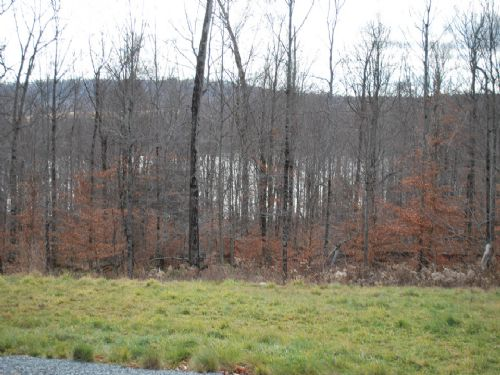 Lot 78, The Woods At Duck Harbor : Equinunk : Wayne County : Pennsylvania