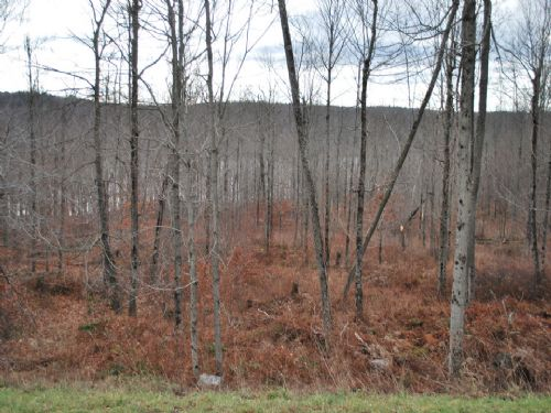 Lot 66, The Woods At Duck Harbor : Equinunk : Wayne County : Pennsylvania