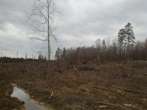 Caney Ridge : Winnfield : Winn Parish : Louisiana