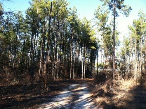 Ogeechee Creek Tract : Sylvania : Screven County : Georgia