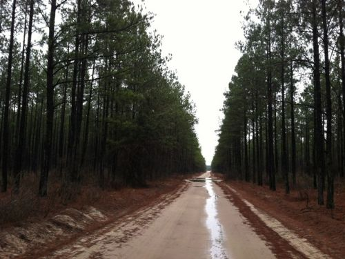 Yam Grandy Creek Tract : Nunez : Emanuel County : Georgia