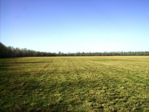 417 Acre Cattle / Development Land : Jacksonville : Lonoke County : Arkansas