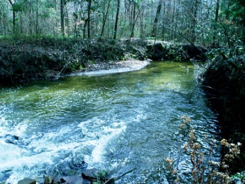 Shady Hollow : Midway : Gadsden County : Florida