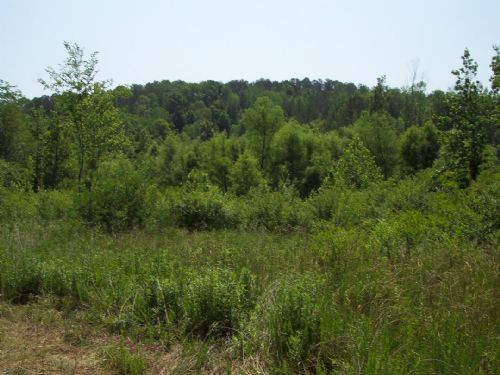 17+/- Mostly Wooded Acres W/ Creek : Adairsville : Bartow County : Georgia