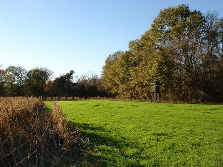106 Acres Of Hunting Land : Montgomery  : Montgomery County : Alabama