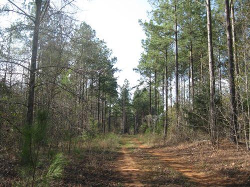 Wade Tract - Parcel 2 : Cuthbert : Randolph County : Georgia