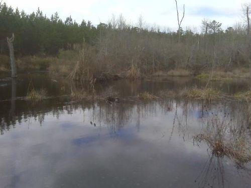 Timber And Recreational Land : Mcrae : Telfair County : Georgia