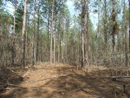 Gilliam Forest 43 : Oakman : Walker County : Alabama