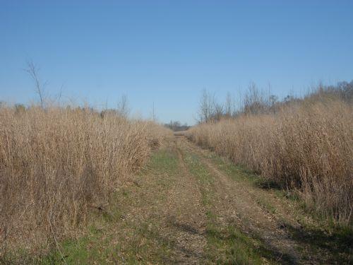 Great Deer Hunting And Crp Land : Ragtown : Monroe County : Arkansas