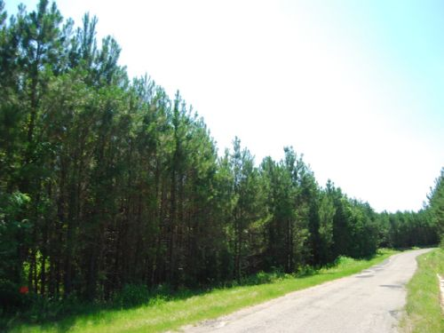 388 Acre Timberland Investment : Chester : Spartanburg County : South Carolina