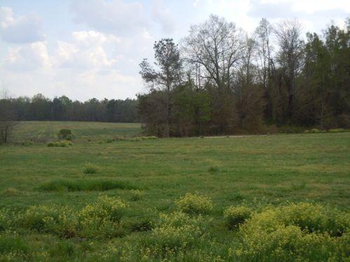 48+/- Acres : Sylvania : Screven County : Georgia