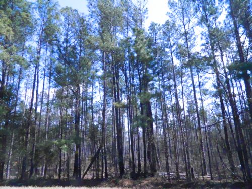 70 Acre Timber Tract : Lexington : Oglethorpe County : Georgia