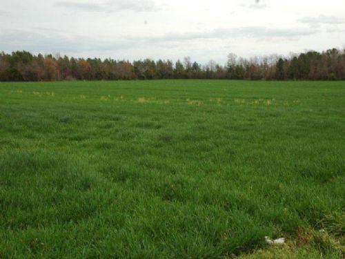 116 Acre Farm Near I-74 : Rowland : Robeson County : North Carolina