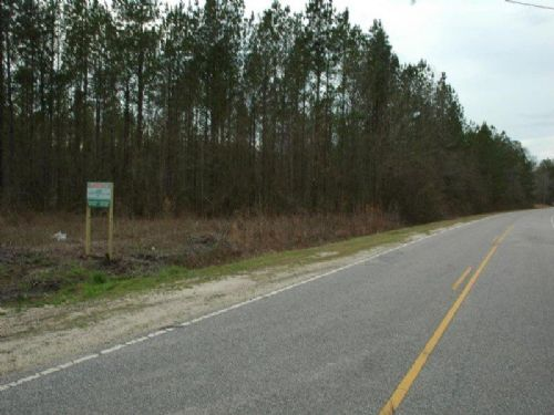 53 Acre Timber Investment Property : Rowland : Robeson County : North Carolina