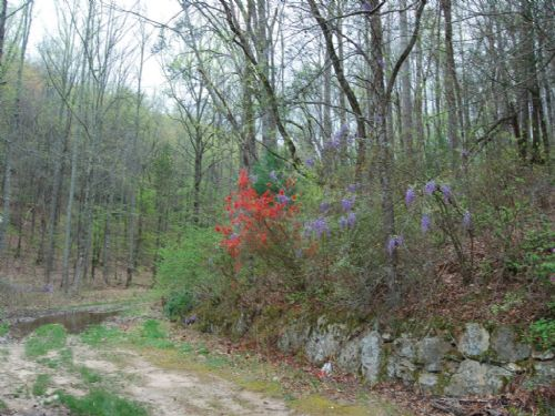 41.5 Acres Near Glassy Mountain : Travelers Rest : Spartanburg County : South Carolina