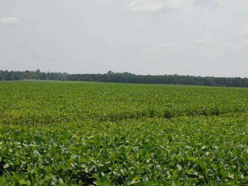 Riverfront Farm & Hunting Property : Bradford : White County : Arkansas