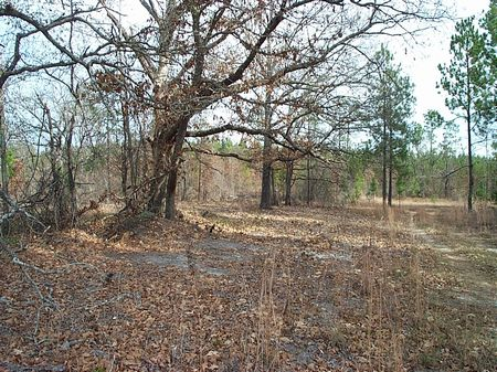 63 Acres Good Hunting Tract : Swainsboro : Emanuel County : Georgia