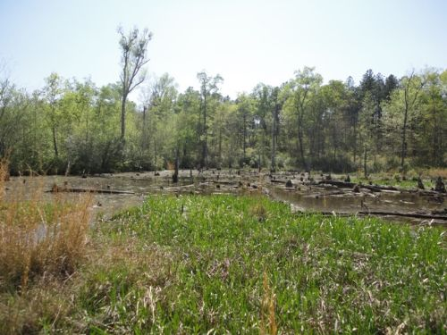 Cabin Beaver Ponds And Pine Timber Farm For Sale