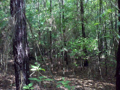 22127sa036 Bobby : Winnfield : Winn Parish : Louisiana