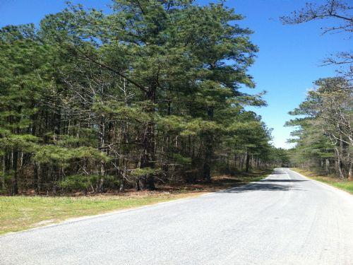 84.9 Acres Timberland : Jarratt : Sussex County : Virginia