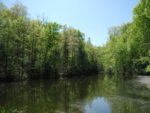 221 Acres Of Scenic Mountain Land : Travelers Rest : Spartanburg County : South Carolina