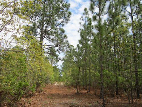 Mt Pisgah Bluff Tract : Kershaw : Kershaw County : South Carolina