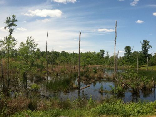 Homesite Or Land Investment On Pond : Rowland : Robeson County : North Carolina