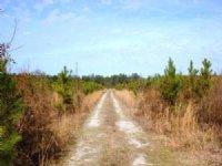 Hunting Land & Timber