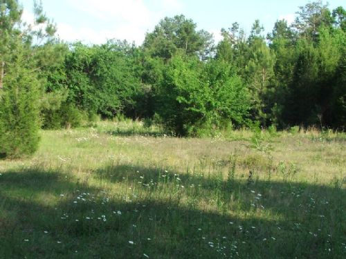 16 Acre Black Belt Tract : Uniontown : Perry County : Alabama