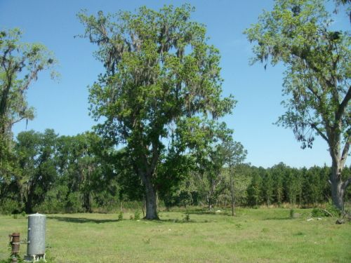 242+ Acres Prime Location : Live Oak : Suwannee County : Florida