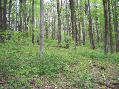 29 Acres Wooded Country Acreage : Danby : Tompkins County : New York