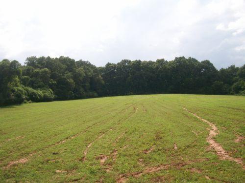 24 +/- Acres : Troy : Pike County : Alabama