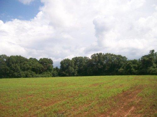 42 +/- Acres, Fenced On 3 Sides : Troy : Pike County : Alabama