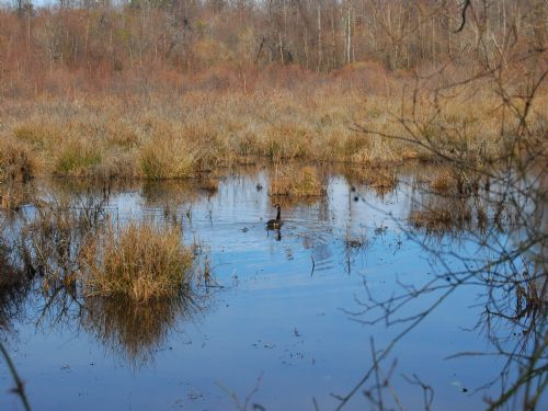 213 Acre Hunting Land W/duck Swamp : Chesnee : Spartanburg County : South Carolina