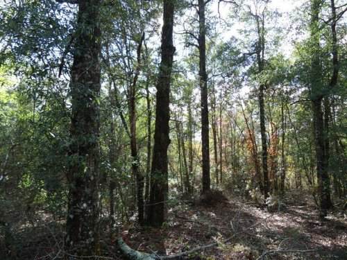 80 +/- Acres In Troy, Al : Troy : Pike County : Alabama