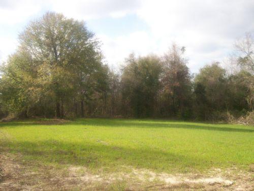 40 +/- Acres In Goshen, Al : Goshen : Pike County : Alabama