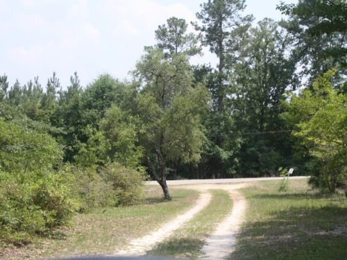 20 +/- Acres In Ozark, Al : Ozark : Dale County : Alabama