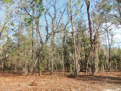 A-378 : Keystone Heights : Clay County : Florida