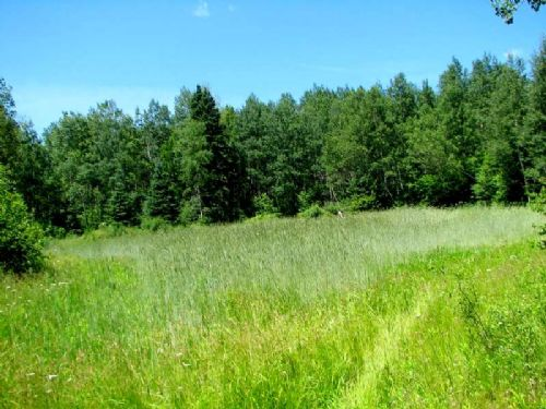 Terrific Trophy Whitetail 306 Acres : Hackett : Price County : Wisconsin