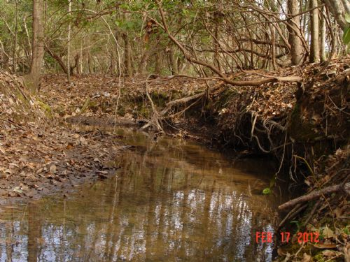 25 Acre Investment : Tunnel Springs : Monroe County : Alabama