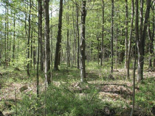 8 Acres Woodlands Hunting Atv Trail : Oppenheim : Fulton County : New York