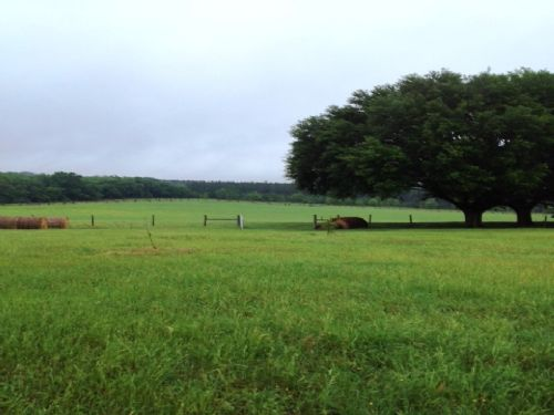 160 Acres High Rolling Ranch : Madison : Madison County : Florida